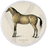 Horse  Equus Ferus Caballus  Illustrated By Charles Dessalines D' Orbigny  1806-1876  Round Beach Towel