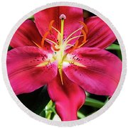 Hot Pink Day Lily Round Beach Towel