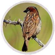 House Sparrow V1818 Round Beach Towel
