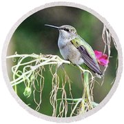 Hummingbird 105 Round Beach Towel
