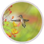Hummingbird And Pride Of Barbados  Round Beach Towel