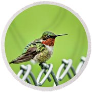 Hummingbird On A Fence Round Beach Towel
