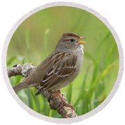 immature White-crowned Sparrow Round Beach Towel
