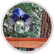 Incoming Steller's Jay Round Beach Towel