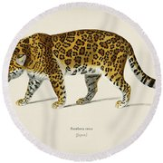 Jaguar  Panthera Onca  Illustrated By Charles Dessalines D' Orbigny  1806-1876  Round Beach Towel