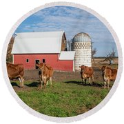Jersey Steer Is A Curious Beast Round Beach Towel