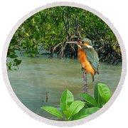 Kingfisher In The Mangroves Round Beach Towel