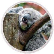 Koala Catching Zs Round Beach Towel