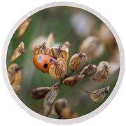 Lady Bird / Lady Bug In Flower Seed Head Round Beach Towel