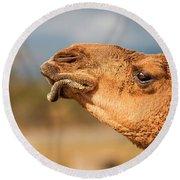 Large Beautiful Camel Round Beach Towel