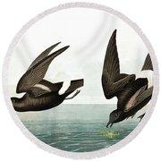 Least Stormy Petrel, Thalassidroma Pelagica By Audubon Round Beach Towel