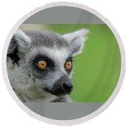 Lemur Orange Eyes Round Beach Towel by Scott Lyons