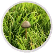 Lonely Little Mushroom Floating On The Grass Round Beach Towel