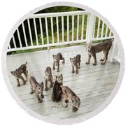 Lynx Family Portrait Round Beach Towel by Tim Newton