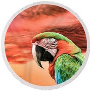 Macaw Parrot Round Beach Towel