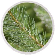 Moist Pine Tree Leaves With Water Droplets. Round Beach Towel
