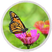 Monarch Butterfly Square Round Beach Towel