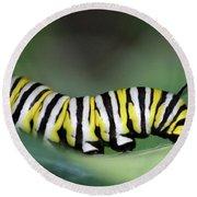 Monarch Caterpillar Macro Round Beach Towel
