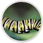Monarch Caterpillar Macro Number 2 Round Beach Towel