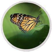 Monarch On Milkweed Round Beach Towel