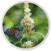 Monarch On White Butterfly Bush Round Beach Towel