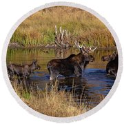 Moose At Green Pond Round Beach Towel
