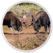 Moose Bulls Spar In The Colorado High Country Round Beach Towel