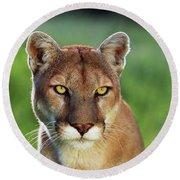 Mountain Lion Felis Concolor, Portrait Round Beach Towel