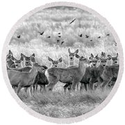 Mule Deer Black And White 01 Round Beach Towel by Rob Graham