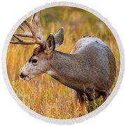Mule Deer Buck In Rocky Mountain National Park Round Beach Towel