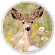 Mule Deer Fawn Lying In Wildflowers Round Beach Towel