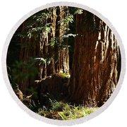 New Growth Redwoods Round Beach Towel