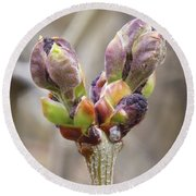 New Life In The Lilacs Round Beach Towel