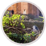 Night Heron At The Palace Round Beach Towel by Kate Brown
