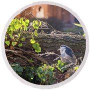 Night Heron At The Palace Revisited Round Beach Towel by Kate Brown