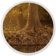 Old Cypress Tree Roots Round Beach Towel