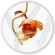 Onion On A White Background Round Beach Towel