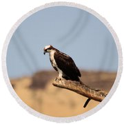 Osprey Waiting For Fish Round Beach Towel