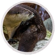 Otter Interrupted Round Beach Towel by Kate Brown