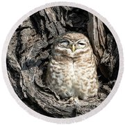 Owl In A Tree Round Beach Towel