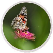 Painted Lady Butterfly At Rest Round Beach Towel