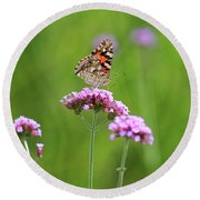 Painted Lady Butterfly In Green Field Round Beach Towel