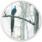 Peacock In Winter Mist Round Beach Towel