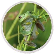 Petals The Tree Frog Round Beach Towel by James Peterson