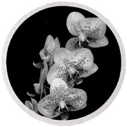 Phalaenopsis Orchids Black And White Round Beach Towel