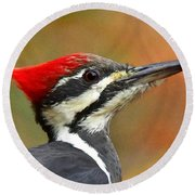 Pileated Woodpecker, 9118 Round Beach Towel