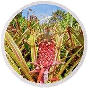 Pineapple Plant Ananas Pico Island Azores Portugal Round Beach Towel