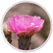 Pink Cactus Bloom Round Beach Towel