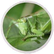 Portrait Of A Great Green Bush-cricket Sitting On A Leaf Round Beach Towel
