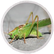 Portrait Of A Great Green Bush-cricket Sitting On The Pavement Round Beach Towel